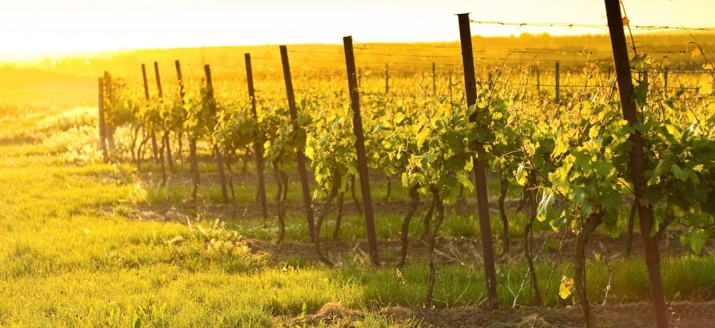 rec-wineries